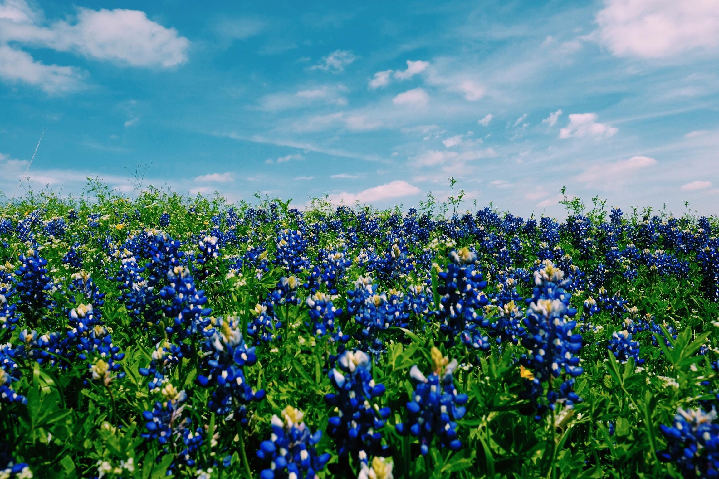 Last Minute Summer Vacation Ideas Around Texas